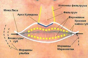 губы-схема